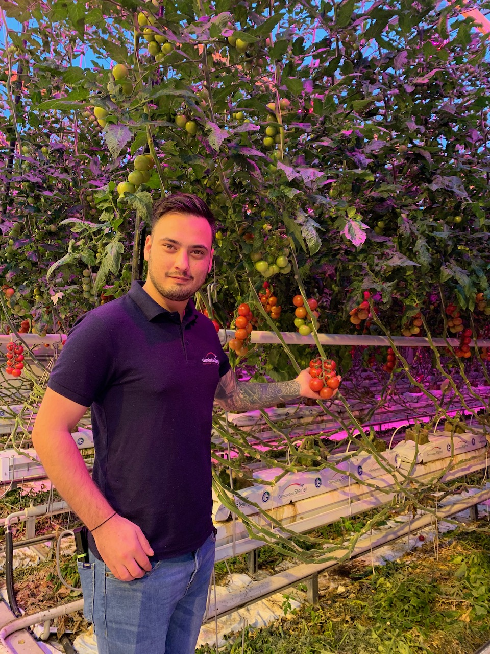 Andrei Mihai Showing Tomatoes at Steiner Greenhouse