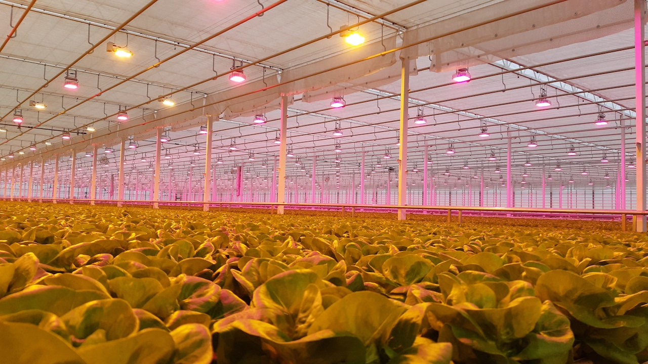 Karpinscy Hybrid and LED Greenhouse Lighting