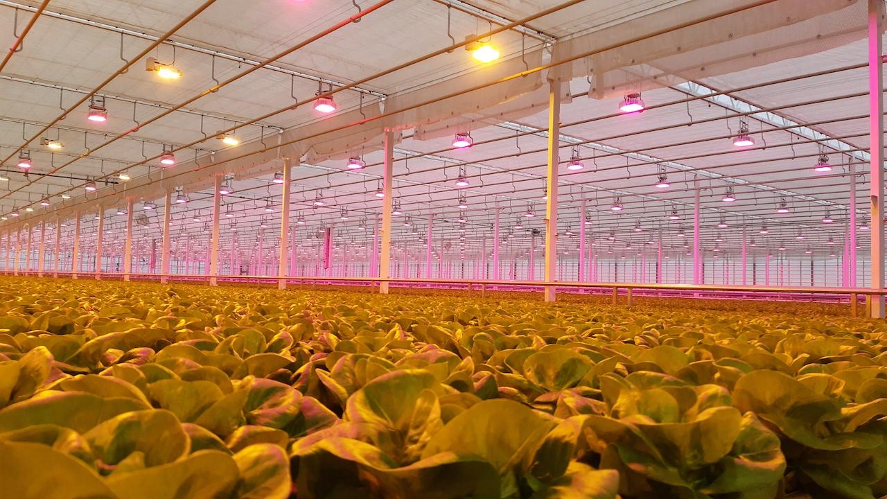 Karpinscy Hybrid and LED Greenhouse Lighting