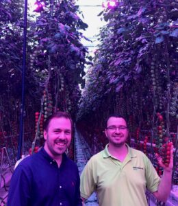 Gemüseproduktion Zorbau LED installation in Tomato Greenhouse