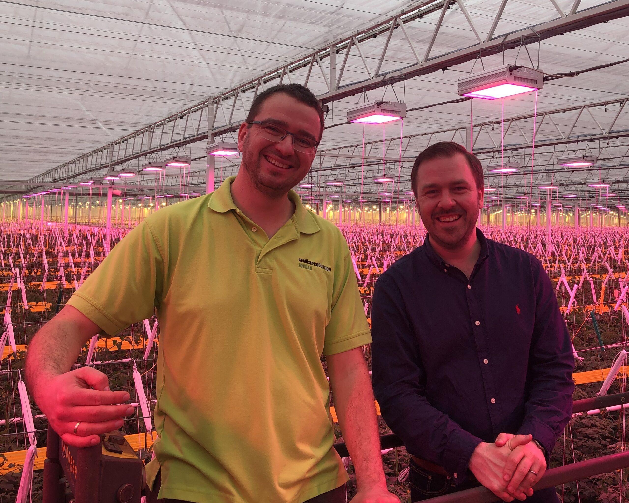 Gemüseproduktion Zorbau LED installation